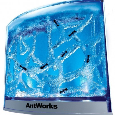 AntWorks Illuminated Blue