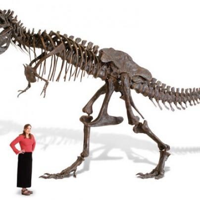 Life Size Tyrannosaurus Skeleton